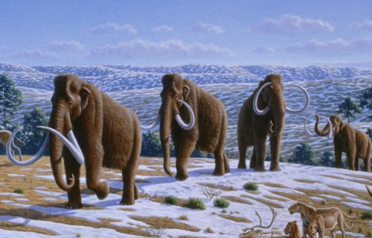 Woolly_mammoth_(Mammuthus_primigenius)_-_Mauricio_Antón